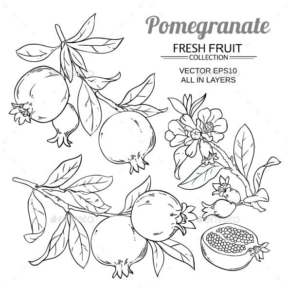Pomegranate Branches Vector Set