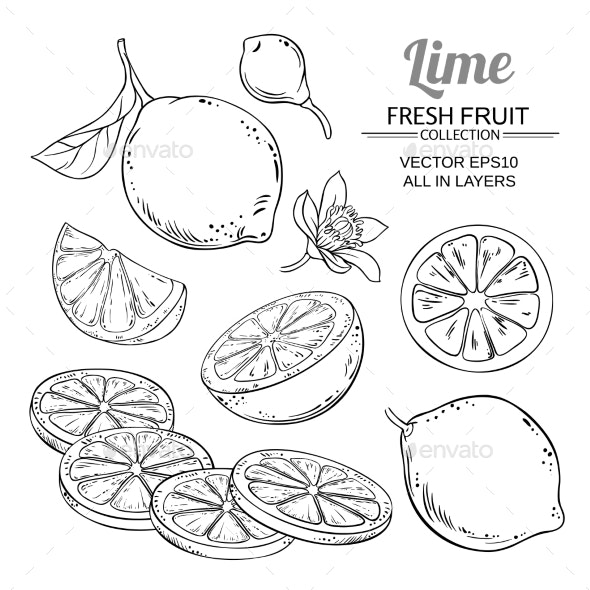 Lime Fruits Vector Set - Food Objects