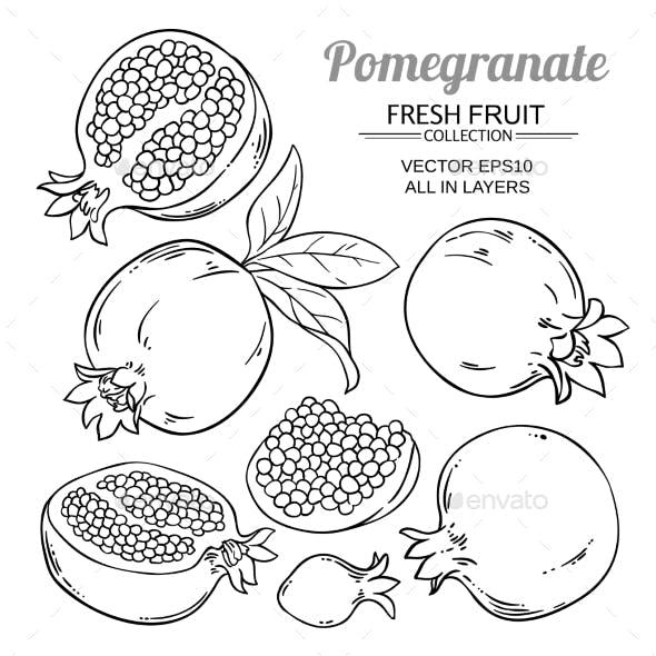 Pomegranate Fruits Vector Set