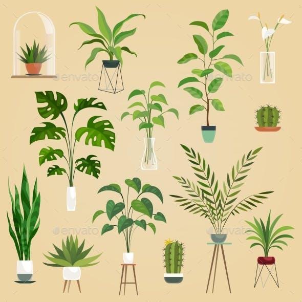 Plants in Pots. Houseplant, Succulent Plants