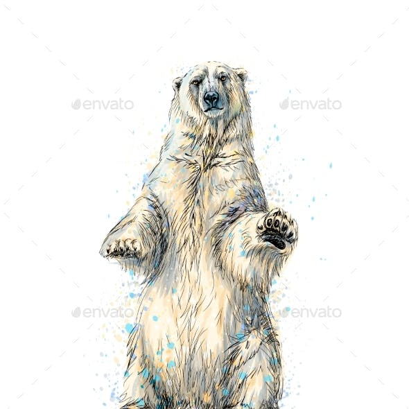 Abstract Polar Bear Sitting From a Splash of