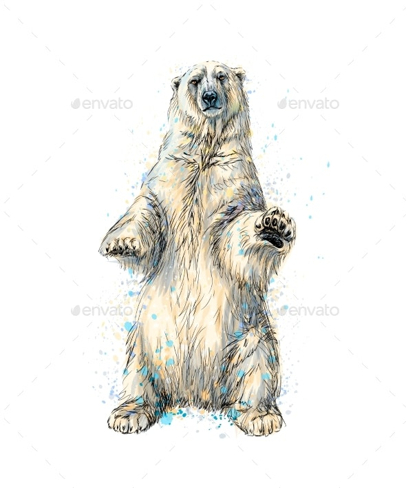 Abstract Polar Bear Sitting From a Splash of - Animals Characters