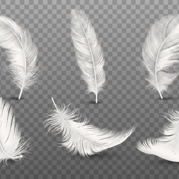 Vector Realistic Feathers