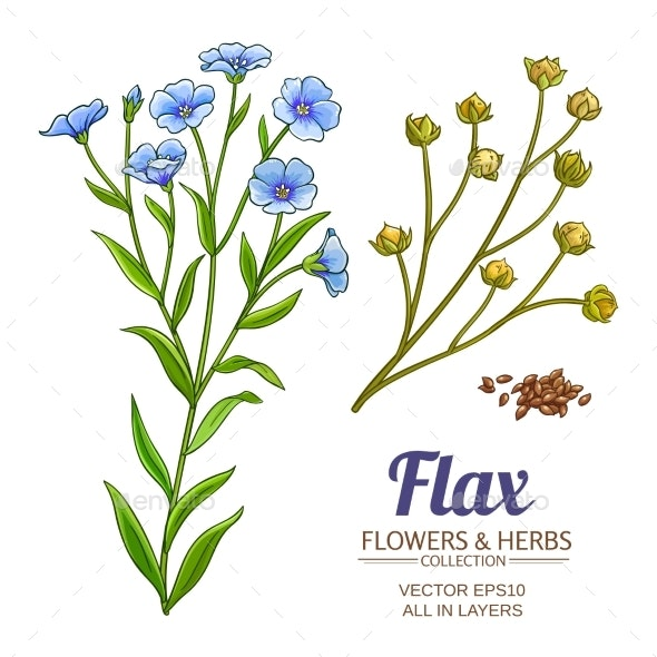 Flax Vector Set - Health/Medicine Conceptual