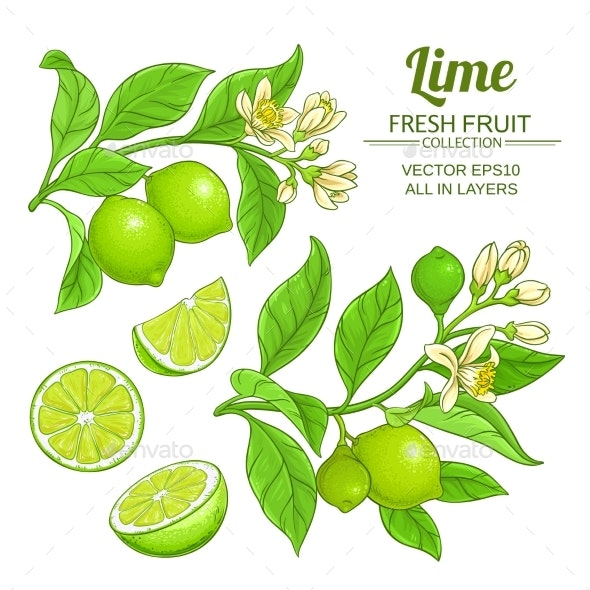 Lime Branches Vector Set - Food Objects