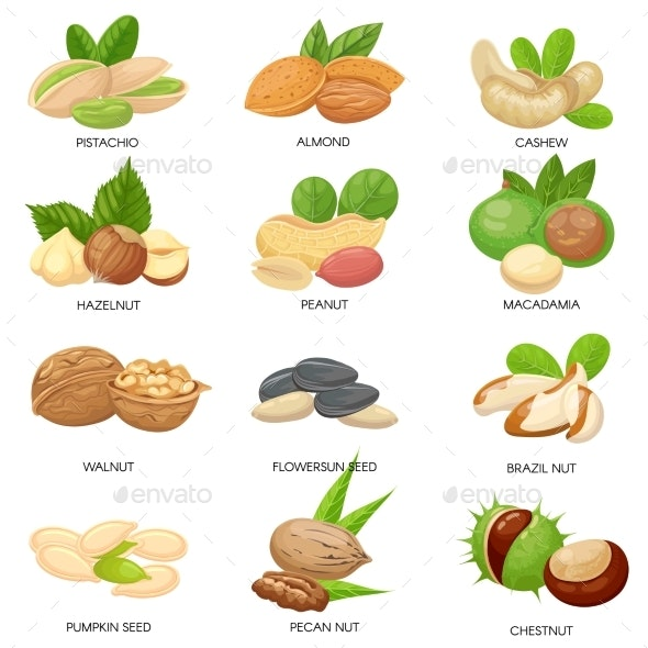 Nuts and Seeds - Food Objects