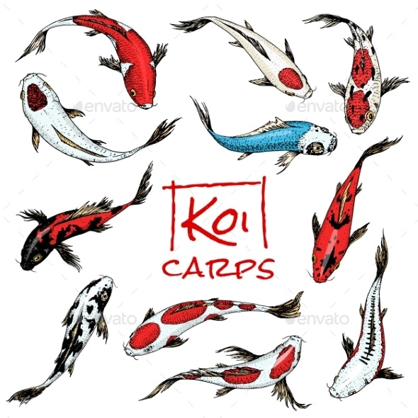 Set of Koi Carps Japanese Fish - Animals Characters