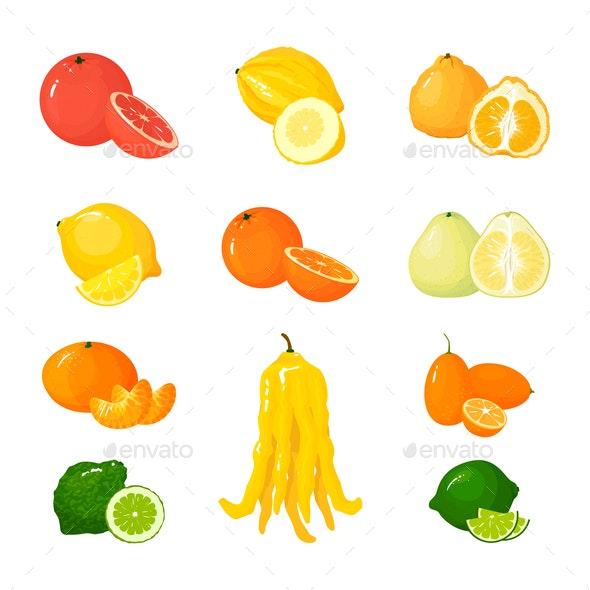 Vector Citrus Set - Food Objects
