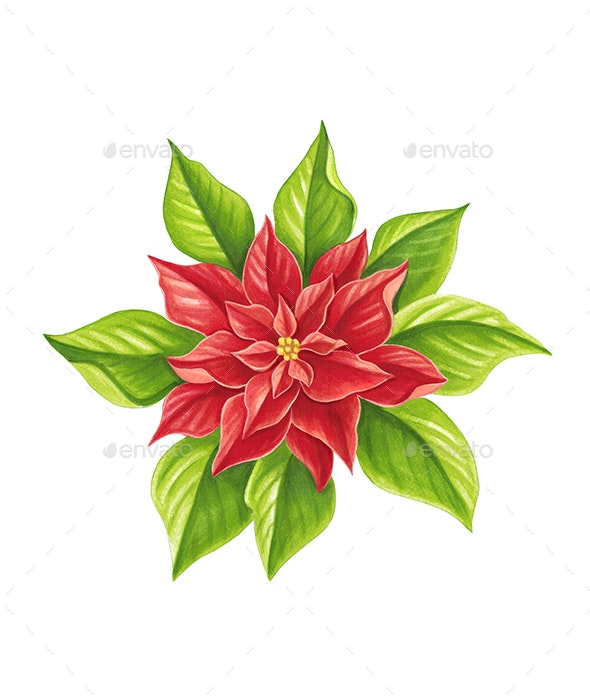Christmas Star - Illustrations Graphics