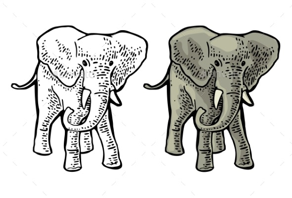Elephant Engraving Vintage Vector Color - Animals Characters