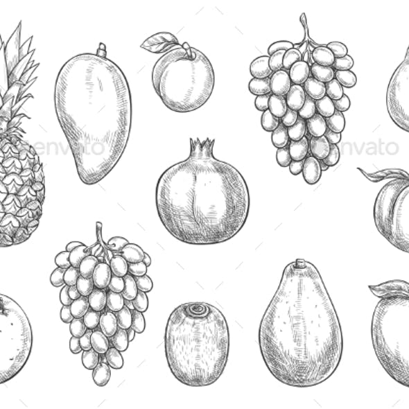 Vector Icons of Exotic and Farm Grown Fruits