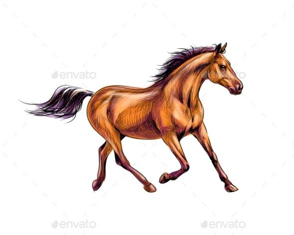 Horse Run Gallop - Animals Characters