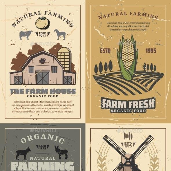 Farming Farm Barn, Field, Vegetables and Animals