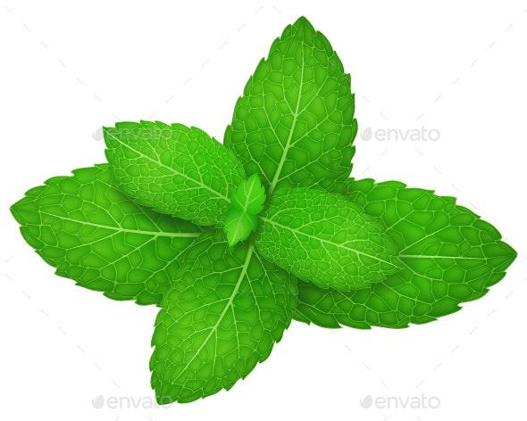 Mint - Flowers & Plants Nature