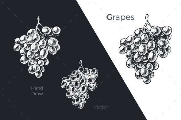 Hand Drawn Grapes - Food Objects