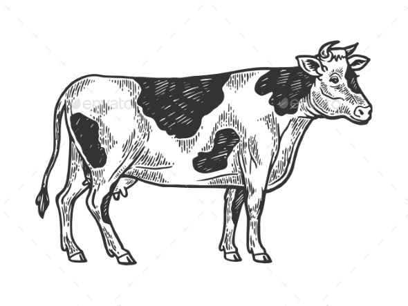 Cow Rural Farm Animal Engraving Vector - Food Objects