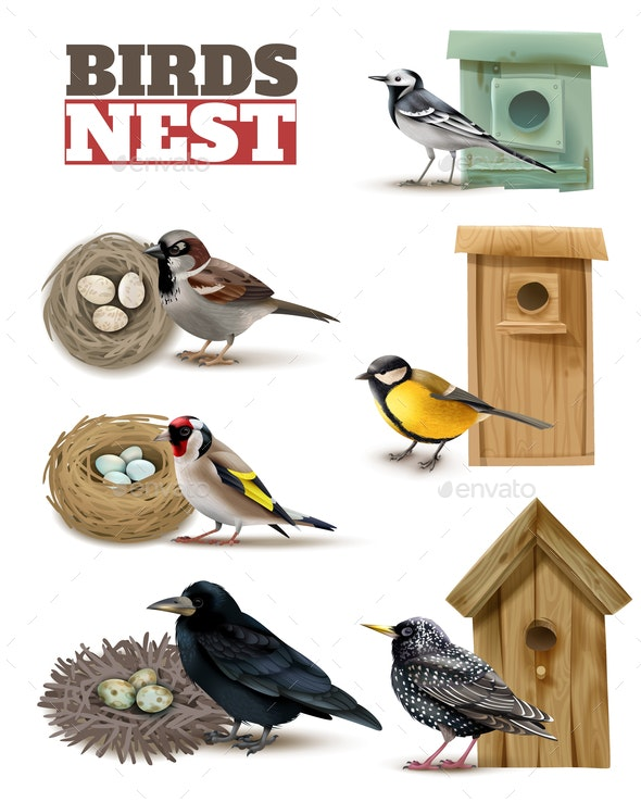 Birds Nests Realistic Set - Animals Characters