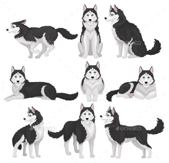 Siberian Husky Set - Animals Characters