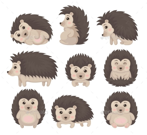 Hedgehog in Various Poses Set - Animals Characters