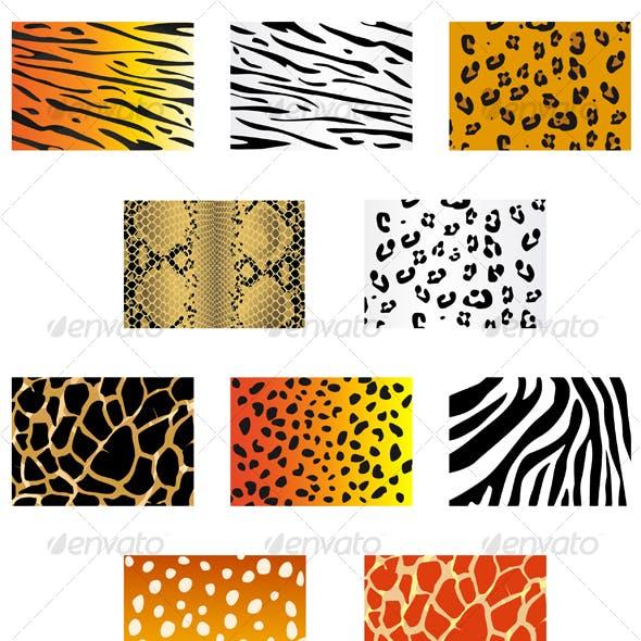 Set of animal fur and skin patterns