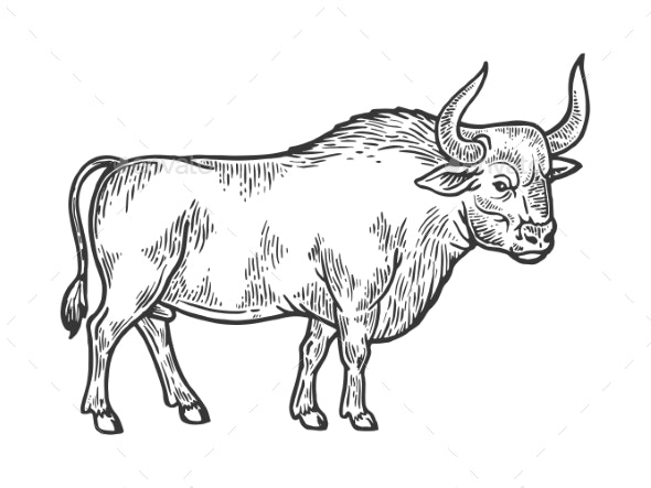 Bull Rural Farm Animal Engraving Vector - Food Objects