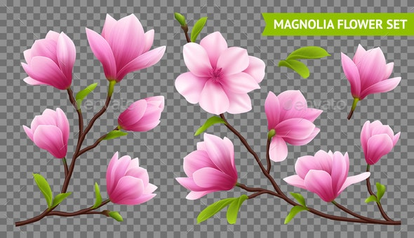 Realistic Magnolia Flower Transparent Icon Set - Flowers & Plants Nature