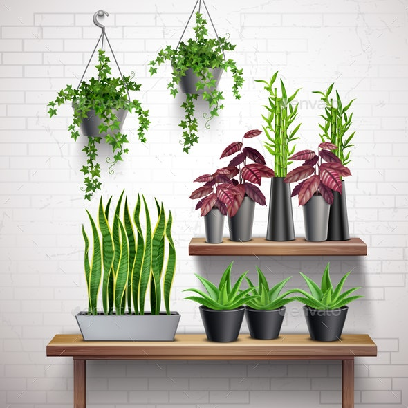 House Plants Realistic Interior - Flowers & Plants Nature