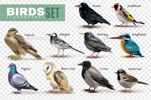 Realistic Birds Transparent Set - Animals Characters