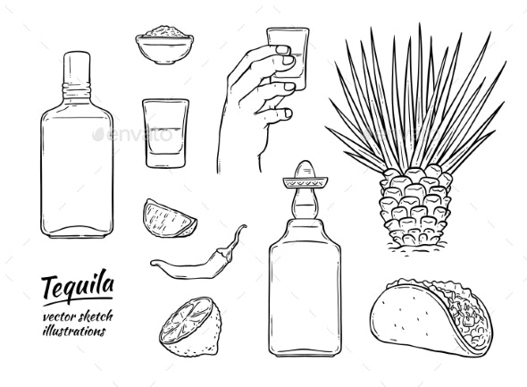 Vector Glass Tequila Bottle Sketch Icon Isolated - Food Objects