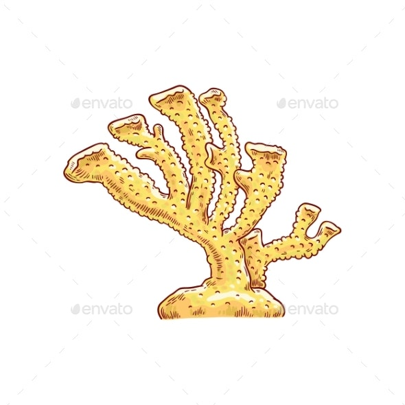 Vector Yellow Coral Underwater Plant Sketch Icon - Animals Characters