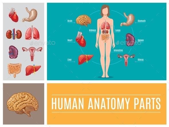 Cartoon Human Anatomy Parts Concept - Health/Medicine Conceptual