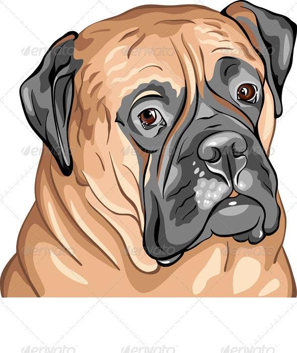 Vector Closeup Portrait of the Dog Breed Bullmasti - Animals Characters