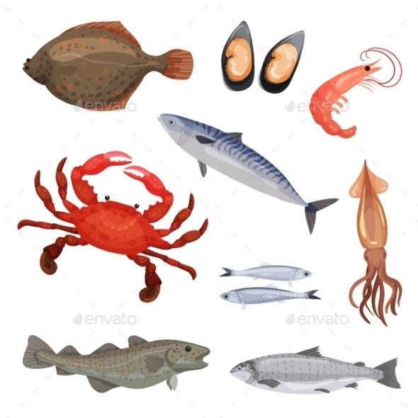 Set of Various Seafood