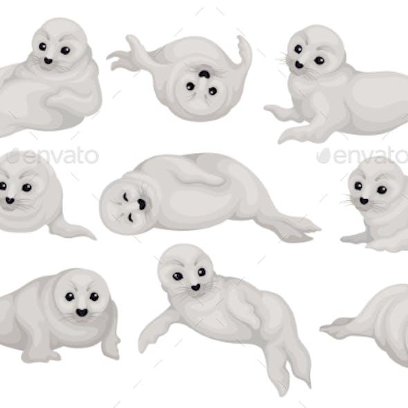 Flat Vector Set of Seal Pups