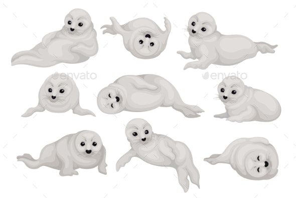 Flat Vector Set of Seal Pups - Animals Characters