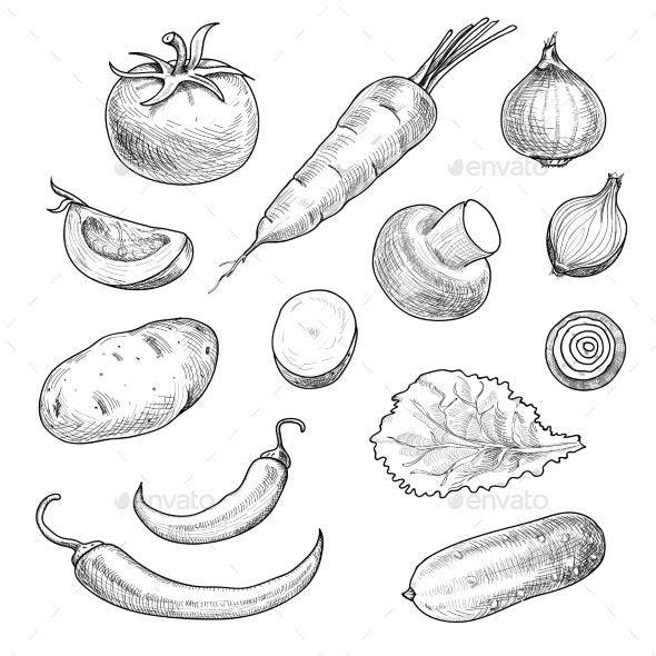 Sketch Vegetables - Food Objects