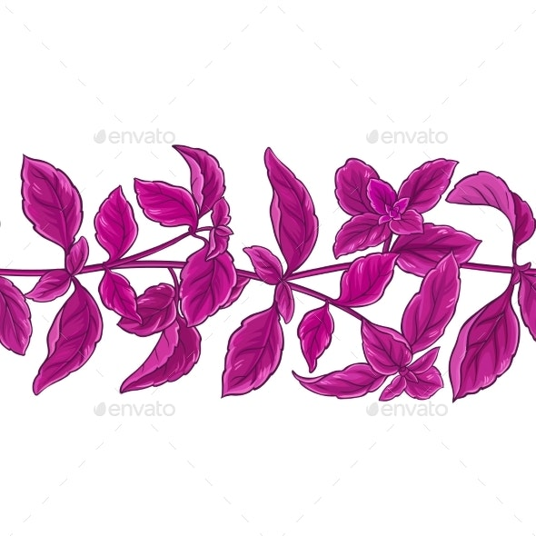 Basil Plant Vector Pattern - Food Objects
