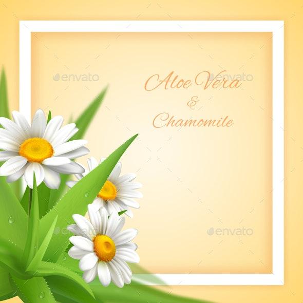 Chamomile Aloe Flowers Background - Flowers & Plants Nature