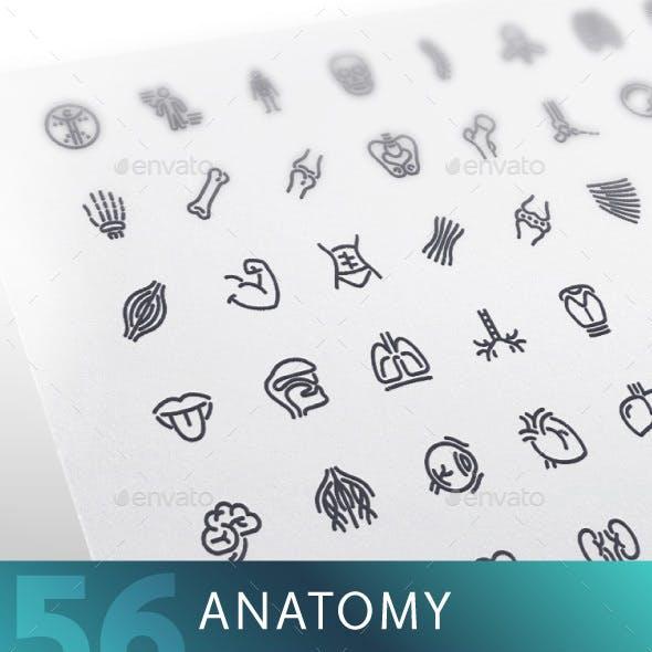 Anatomy Line Icons Set