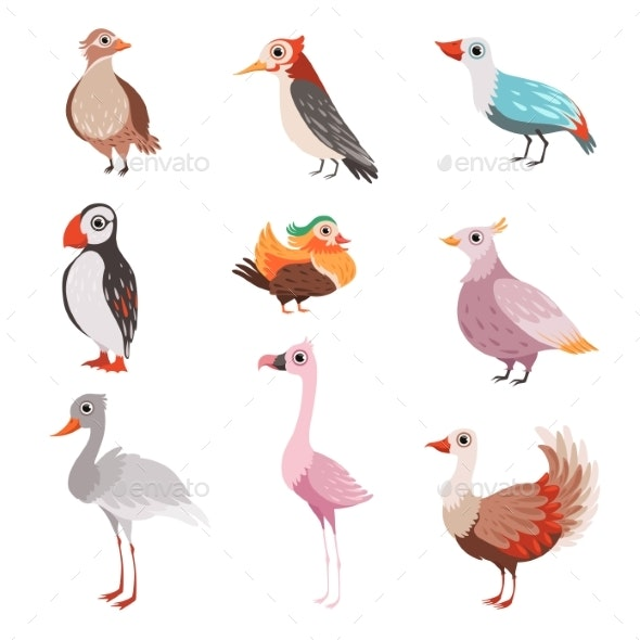 Collection of Beautiful Birds, Flamingo, Puffin - Animals Characters