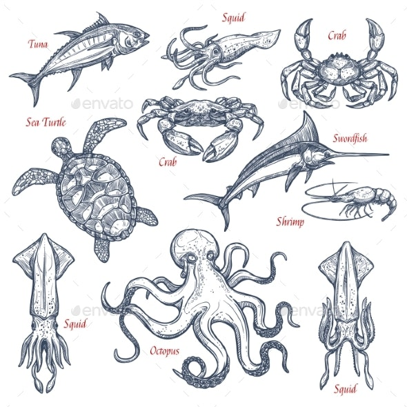 Sea Animal Isolated Sketch Set of Seafood and Fish - Food Objects