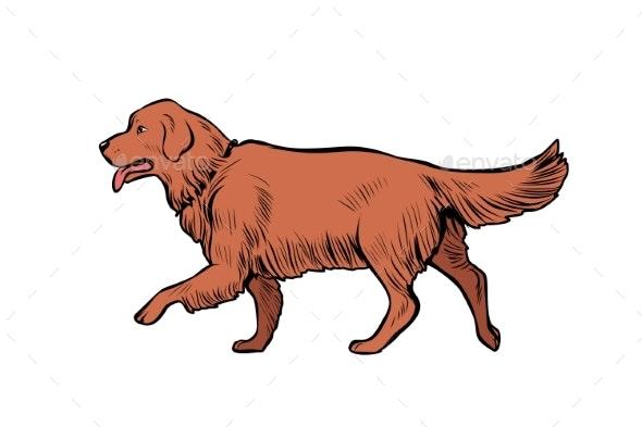 Golden Retriever Dog - Animals Characters