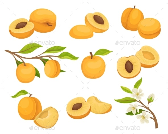Flat Vector Set of Apricot Icons - Food Objects