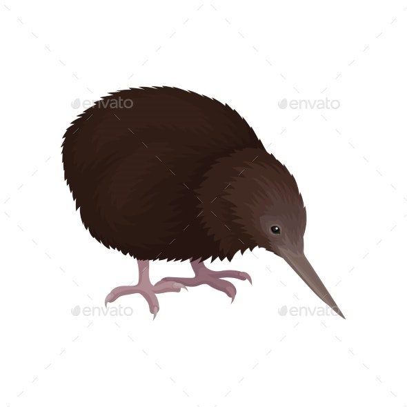 Detailed Flat Vector Icon of Kiwi Bird - Animals Characters