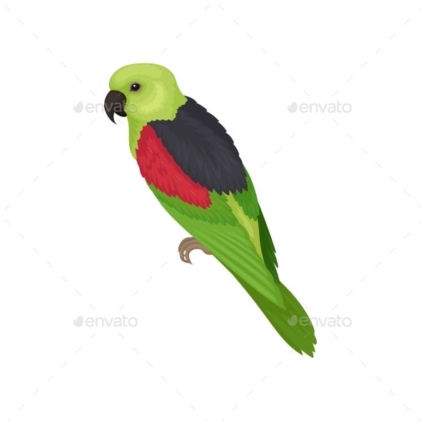Lory Parrot with Bright Feathers Australian Bird - Animals Characters