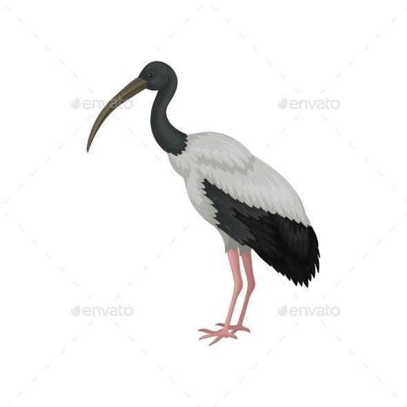 Australian White Ibis - Animals Characters
