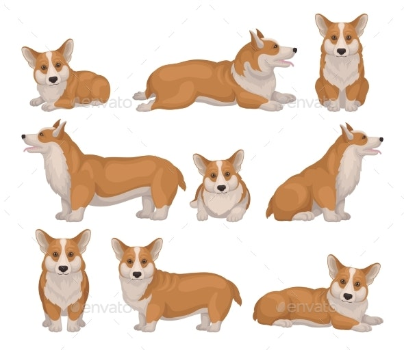 Set of Welsh Corgi Dog in Different Poses - Animals Characters