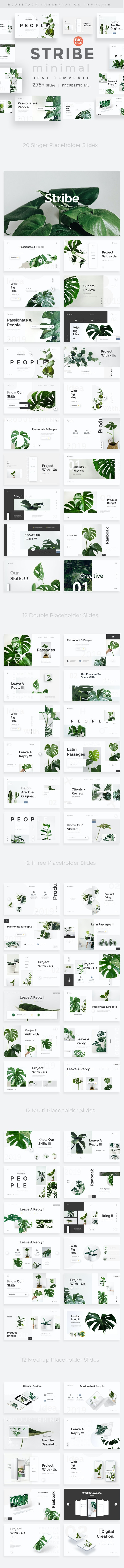 Stribe Minimal Design Keynote Template - Creative Keynote Templates