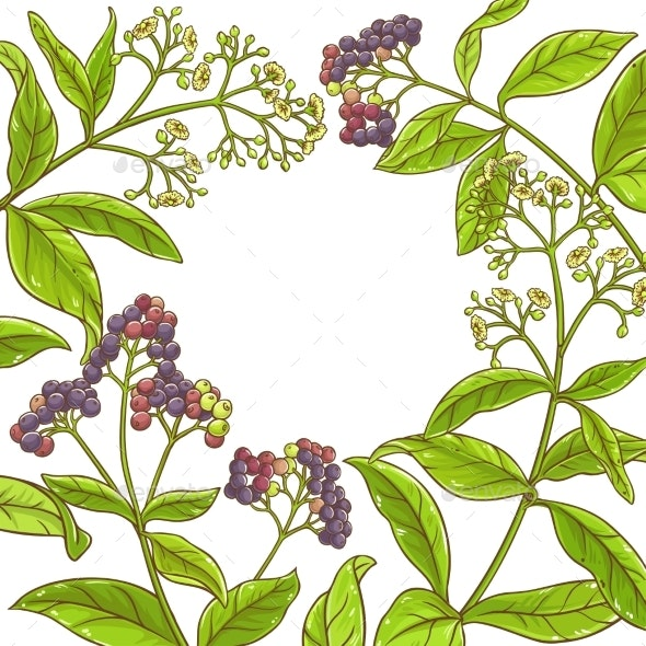 Allspice  Branch Vector Frame - Food Objects