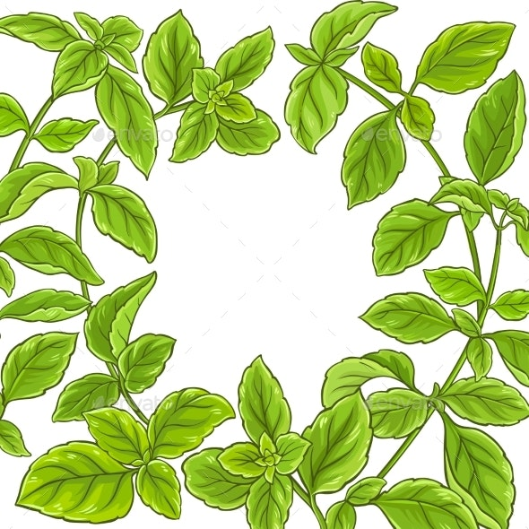 Basil Plant Vector Frame - Food Objects